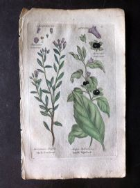 Hill & Culpeper 1792 HCol Botanical Print. Marsh Rosemary, Deadly Nightshade